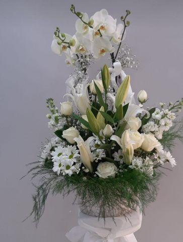 arajman orkide